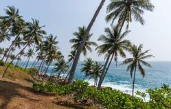 härlig scenisk sikt av kustlinjen med palmträd, Sri Lanka, mirissa royaltyfri fotografi