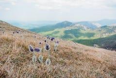 härlig scenisk sikt av vårblommor och berg i Ukraina, Krim, arkivbild