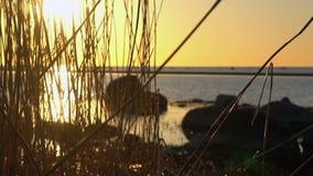 Härlig scenisk solnedgång på stranden arkivfilmer