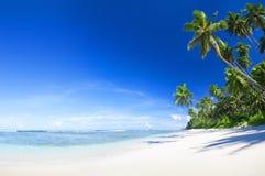 Härlig scenisk strand med palmträdet Arkivbilder