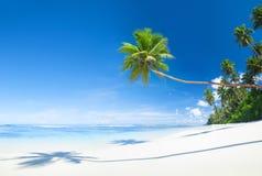Härlig scenisk strand med palmträdet Arkivbild