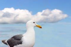 härlig seagullwhite Arkivfoton