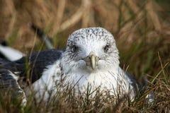 härlig seagullwhite Arkivfoto