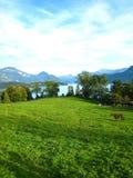 Härlig sikt över en schweizisk sjö för turkos med snö-täckte berg, yachter, segelbåtar och en häst i ett härligt arkivfoto