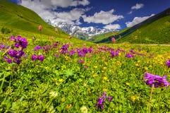Härlig sikt av alpina ängar i de Kaukasus bergen Royaltyfria Foton