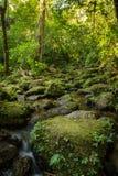 Härlig sikt av bergfloden Fotografering för Bildbyråer