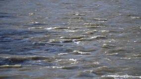 Härlig sikt av bergfloden från denblivna bron Berg Altai stock video