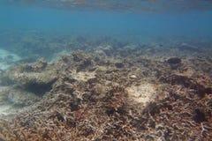 Härlig sikt av döda korallrever Turkosvatten- och vitsandbakgrund Indiskt hav arkivfoto