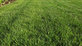 Härlig sikt av den främre gården av den privata trädgården grön lawn för gräs arkivfilmer