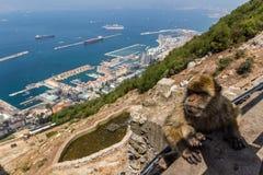 Härlig sikt av den Gibraltar staden Arkivfoto