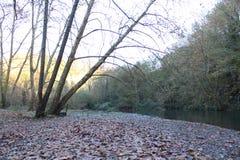 Härlig sikt av den höstträd och floden Royaltyfri Fotografi