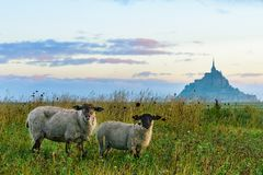 Härlig sikt av den Mont Saint Michel abbotskloster på ön med får på fältet, Normandie, nordliga Frankrike royaltyfria foton