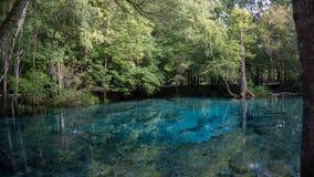 Härlig sikt av det kristallklara vattnet för turkos av lagun av Ginnie Springs, Florida USA arkivbilder