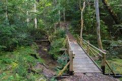 Härlig sikt av en liten träbro över en ström i skogen i den Gauja nationalparken i Lettland arkivfoton