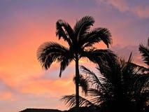 Härlig sikt av en solnedgång med en orange himmel bak kokospalmen royaltyfri bild