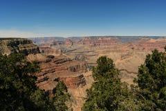 Härlig sikt av Grandet Canyon och träd royaltyfria bilder