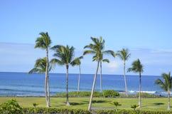 Härlig sikt av palmträd Royaltyfri Bild