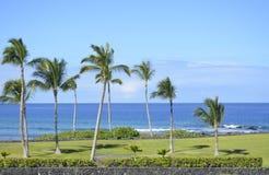 Härlig sikt av palmträd Royaltyfria Bilder