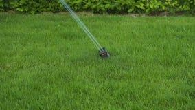 Härlig sikt av processen av automatisk gräsmatta som bevattnar på sommardag stock video