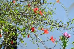 Härlig sikt av röda blommor under solljuslandskap på sommar Aegina ö, Grekland Arkivbilder
