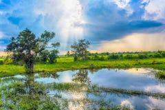 Härlig sikt av risfältet Den härliga sikten av risfältet och blå himmel fördunklar Arkivfoton