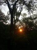 Härlig sikt av solen till och med det mest tjock Royaltyfria Foton