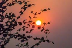 Härlig sikt av solnedgången till och med sidor på trädet arkivfoton