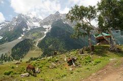 Härlig sikt av Sonamarg i Kashmir, Indien Arkivbilder