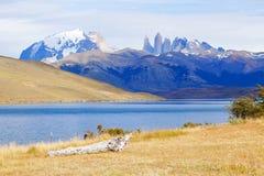 Härlig sikt av Torres Del Paine National Park, Patagonia av C Arkivfoton