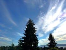 Härlig sikt av träd och himlen Royaltyfri Bild