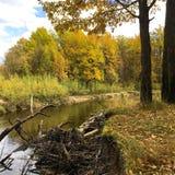 härlig sikt för bakgrundslandskap av skogen och skogfloden i Oktober Arkivbild