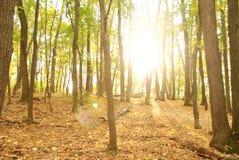 Härlig sikt Forest Russia royaltyfri bild