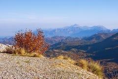 Härlig sikt från brant berglutning Montenegro Lovcen nationalpark royaltyfri fotografi