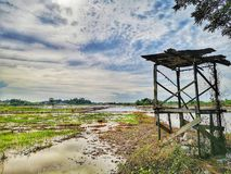 Härlig sikt i risfältfält och gammalt skydd royaltyfri bild
