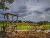 Härlig sikt i risfältfält och gammalt skydd royaltyfria bilder