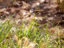 Härlig sikt på det gröna gräset i trädgården, closeup Del av fältet för att få detaljerna royaltyfria bilder