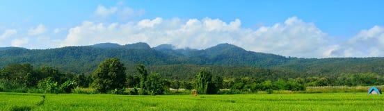 Härlig sikt på risfält i chiangmaien, Thailand Royaltyfri Fotografi