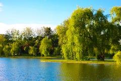Härlig sikt på sjön arkivbild