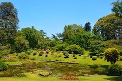 Härlig sjö i Peradeniya den kungliga botaniska trädgården i Kandy, Sr Royaltyfria Foton