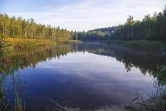 Härlig sjö i skogen Arkivbilder