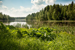Härlig sjö i sommaren Arkivfoton