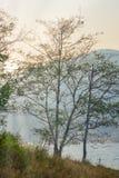 Härlig sjö i sommarsäsong med guld- ljusa strålar arkivfoto