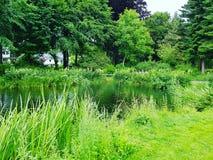 Härlig sjö och vegetation i olsberg Arkivfoto