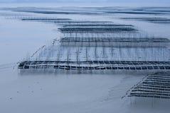 härlig sjösida Royaltyfri Foto