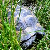 Härlig sköldpadda arkivbild