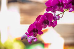 härlig skapad orchidpink ps för bakgrund Royaltyfri Bild