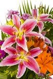 härlig skjuten blommamakro Royaltyfria Bilder