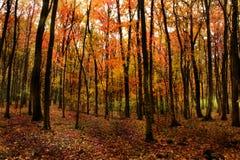 härlig skog Arkivfoton