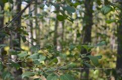 Härlig skog Arkivbild