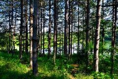 härlig skog arkivbilder